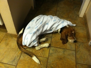 Bella, our Basset was the only one getting any sleep around here this past year!